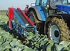 cabbage harvester ikn